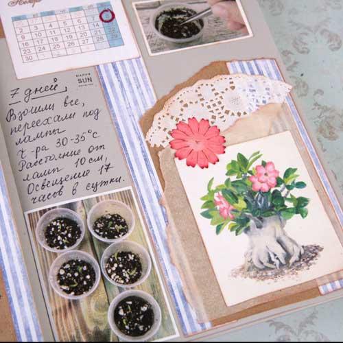 календарная сетка, оформление артбука, посев семян адениума, выращивание адениума
