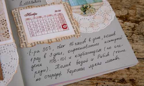 дневник по растениям, как вести дневник, посев адениумов, адениумбум, адениумдома, адениумомания
