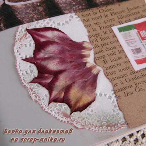 блокнот с гербарием, как оформить гербарий, как сделать гербарий, гербарий своими руками