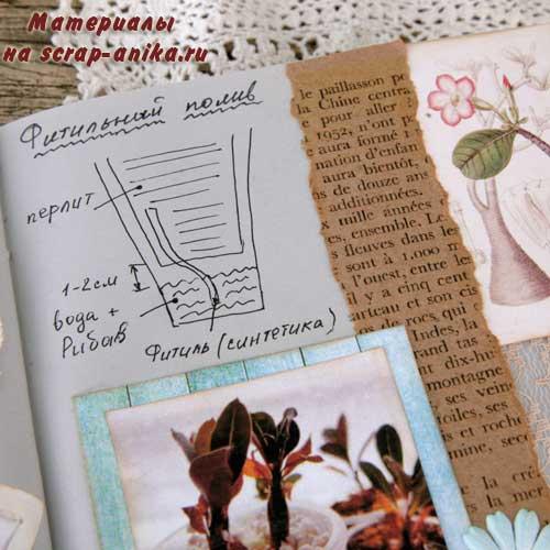 фитильный полив, что такое фитильный полив, адениум дома, адениум бум, как сделать артбук, дневник по адениумам