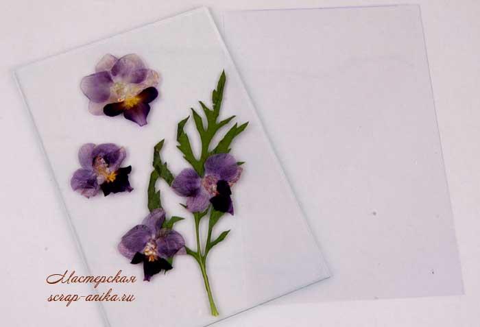 гербарий, как сделать гербарий, гербарий в микроволновке, орхидеи, сухие орхидеи