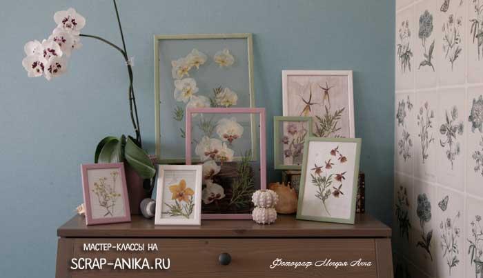 гербарий в интерьере, орхидеи в интерьере, орхидеи, цветы в интерьере