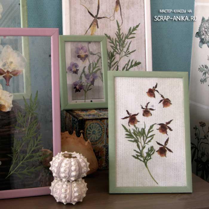 гербарий в интерьере, как сделать гербарий, гербарий из орхидей, орхидеи гербарий