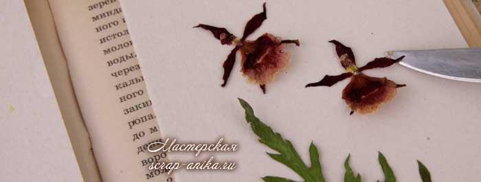 как сделать гербарий в микроволновке, как быстро сделать гербарий, гербарий для скрапбукинга